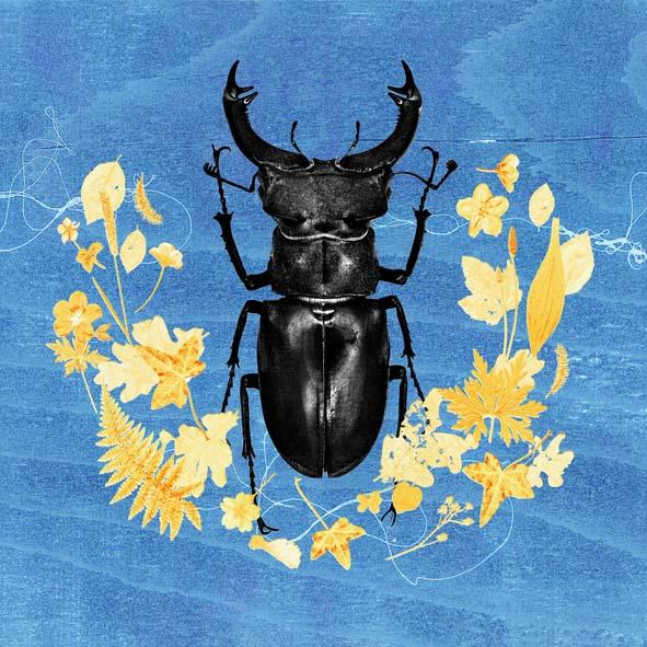 Butterflies beetles & begonias