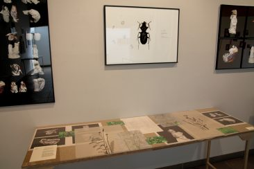 Typography of Wrapped Objects, Clock Beetle and evidence table 5