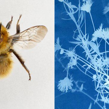 Bees & Weeds