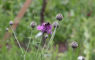 Bees visiting July 2013