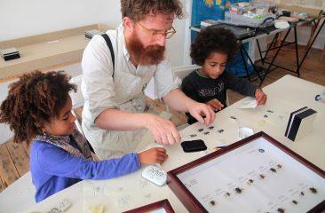 Printing up dung beetles
